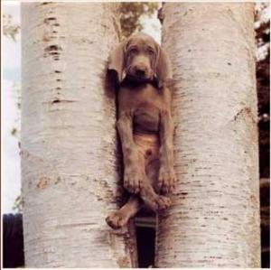 stuck-dog